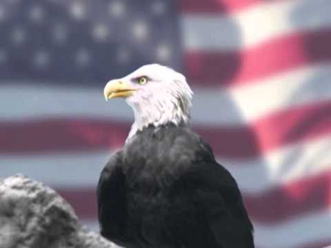 The American Eagle And Flag