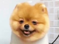 Cutest Dog Ever -  Keep On Smiling - Very Funny Dog
