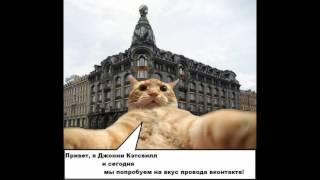 коты мемы