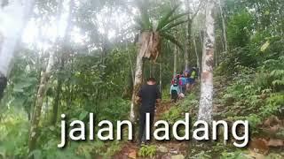 Tanam Padi Bukit 2019