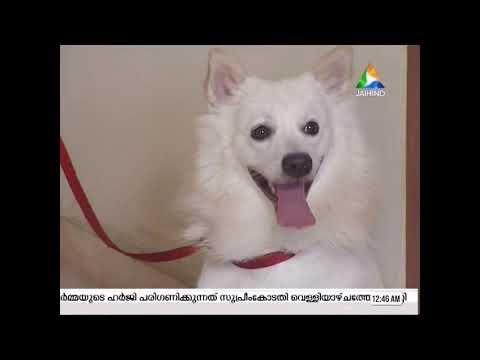 rehab of reactive dog