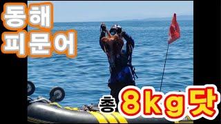 동해안 대왕문어 낚시//레저보트타고 피문어 총8kg 성…