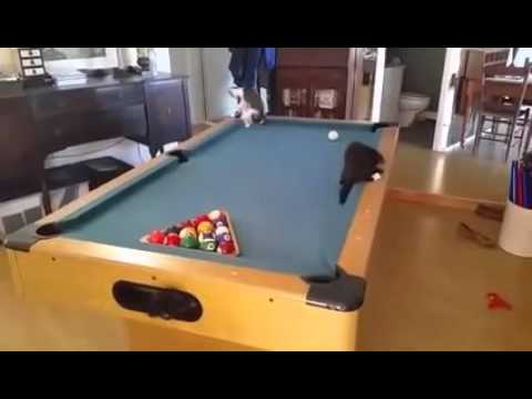 kittens playing on a pool table
