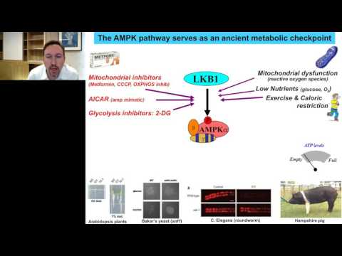Reuben Shaw - Advances in AMPK and Autophagy signaling