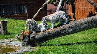 ZOO Safari Borysew - zwierzęta w zbliżeniu