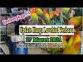 Ini Dia Paling Baru Update Harga Lovebird Terbaru  Maret  Latest Lovebird Prices  Mp3 - Mp4 Download