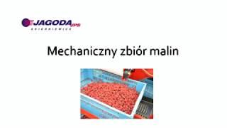Mechaniczny Zbiór Malin - JAREK 5