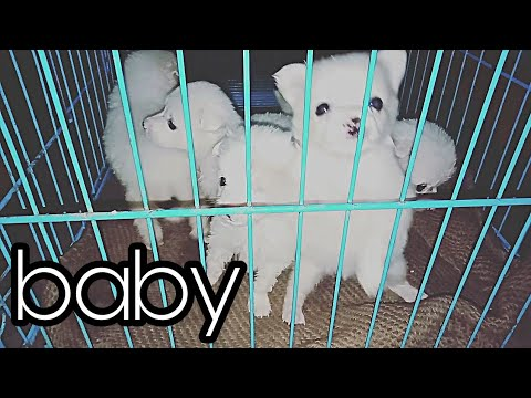 After 1 month my pet dog baby's( short video)