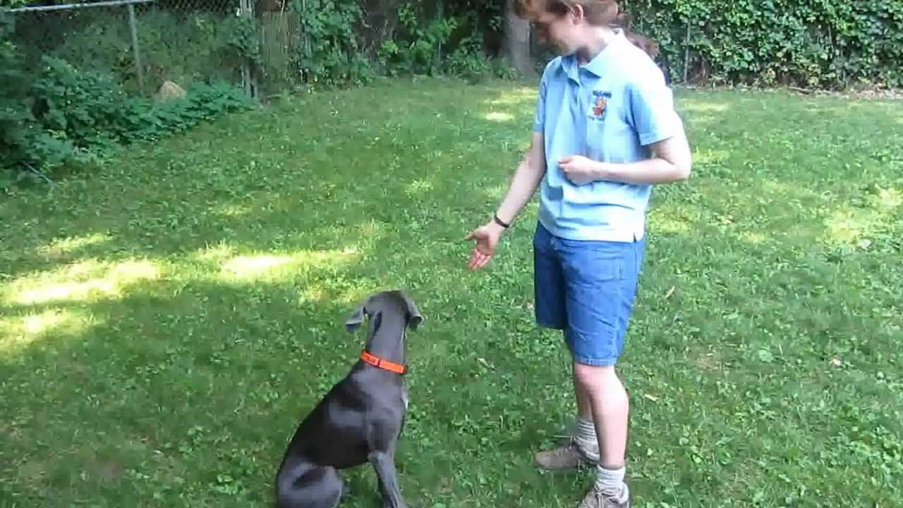 how to train your dog to hand target