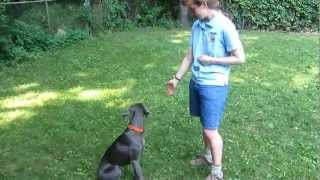 "Teaching Your Dog To Hand Target Or ""touch"""