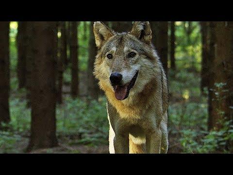 Auf Der Jagd Wem Gehört Die Natur Trailer Deutsch German Hd Youtube