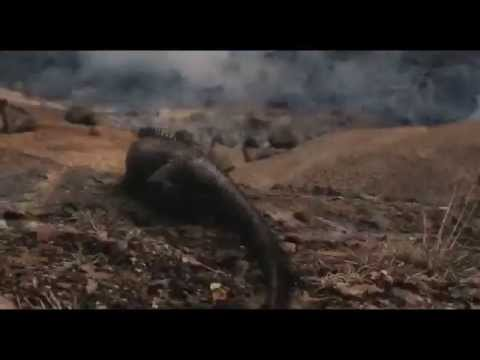 Noah - Creation (Movie Clip)
