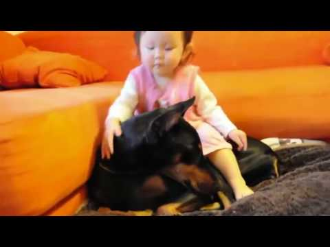 Don't Get A Doberman If You Have Kids!! Really ??