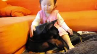 Download Don't Get A Doberman If You Have Kids!! Really ?? Mp3 and Videos