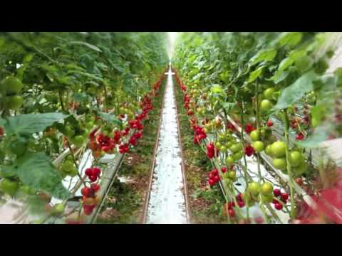 Agricultural projects Organic Solutions