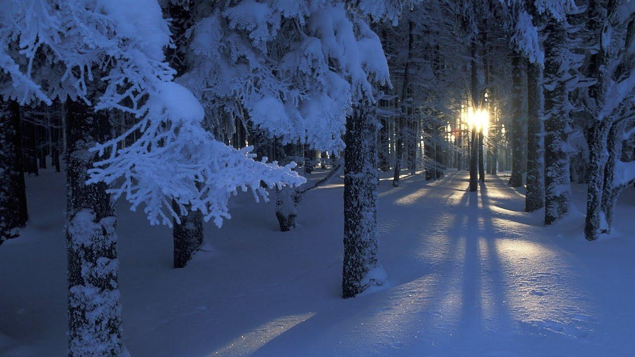 охота зимой ночью