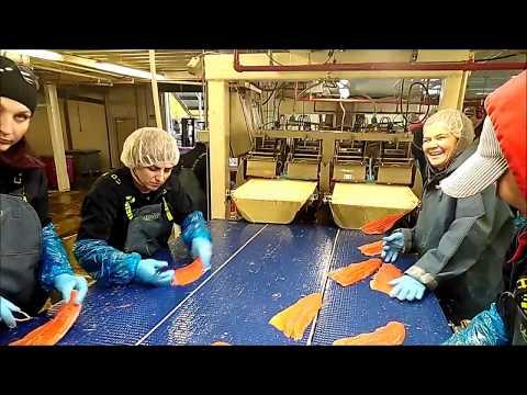 Работа на Аляске на рыбоперерабатывающем заводе.Рыбзавод