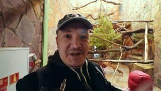 ВЛОГ 2.4: Нападение ЛЬВА в Санкт-Петербургском зоопарке
