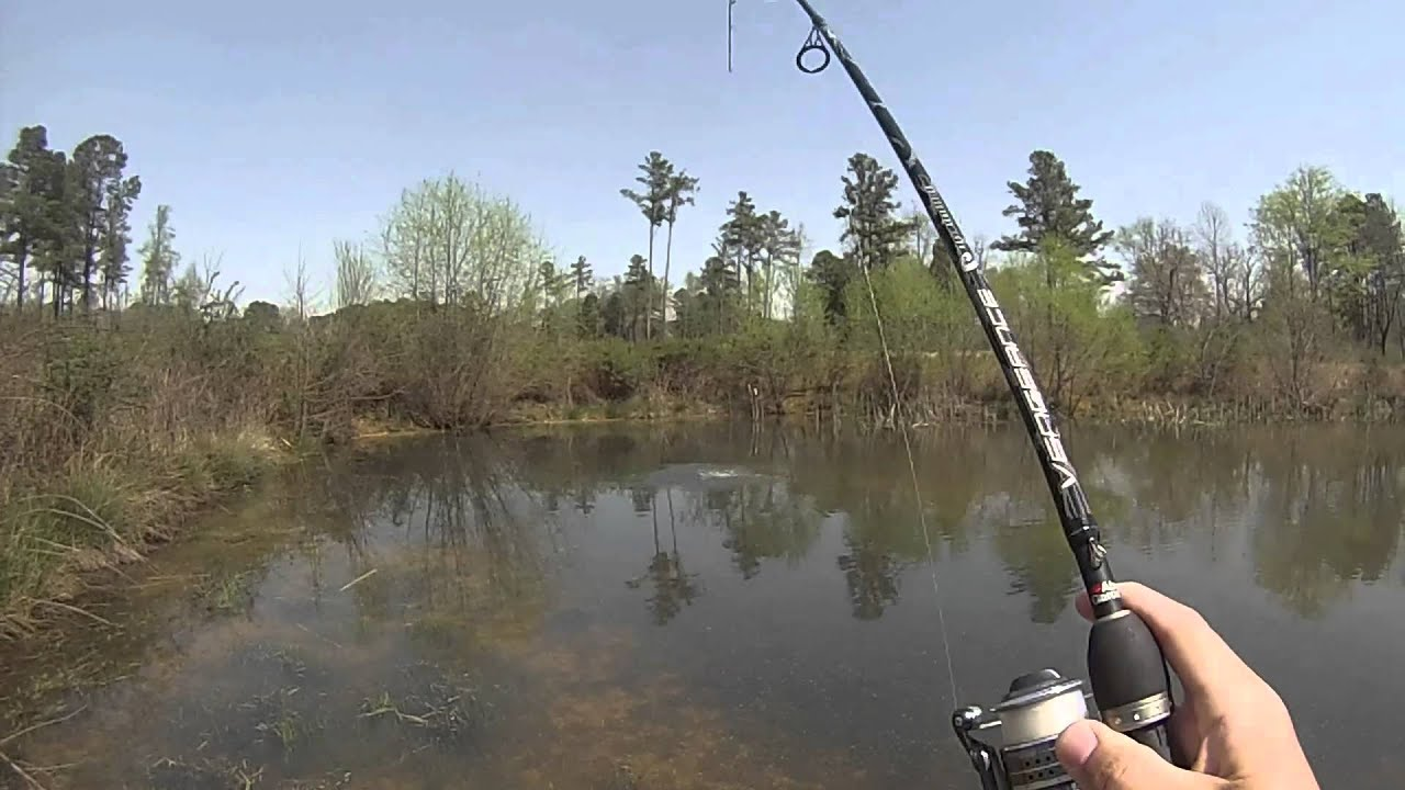 Spring largemouth bass sight fishing in crystal clear for Clear lake fishing report
