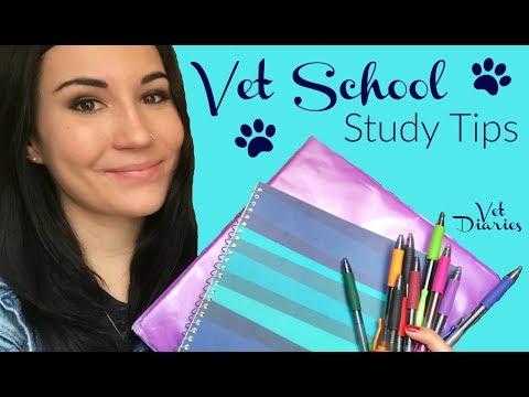 VET SCHOOL STUDY TIPS | Vet Diaries