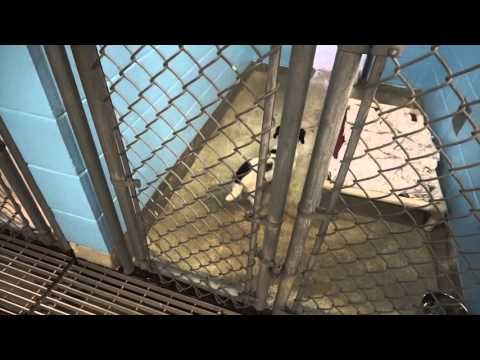 Doors Open Vancouver 2015 - Animal Control Shelter