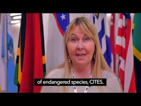 Sea Save Foundation @CITES CoP18