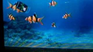 My Aquarium(Wii Ware)