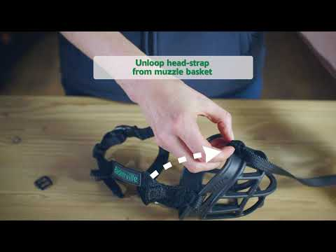 New Baskerville Ultra Muzzle Headstrap Removal