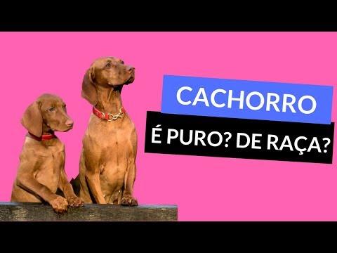 Raça de Cachorro - Como Saber se o Cachorro é de Raça ( PURO ) - Que Raça É Meu Cão? thumbnail