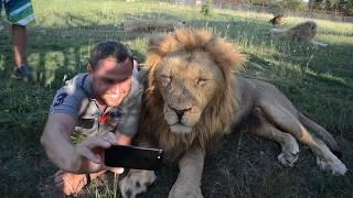 Фото с белым львом или как сделать селфи с Малышом !