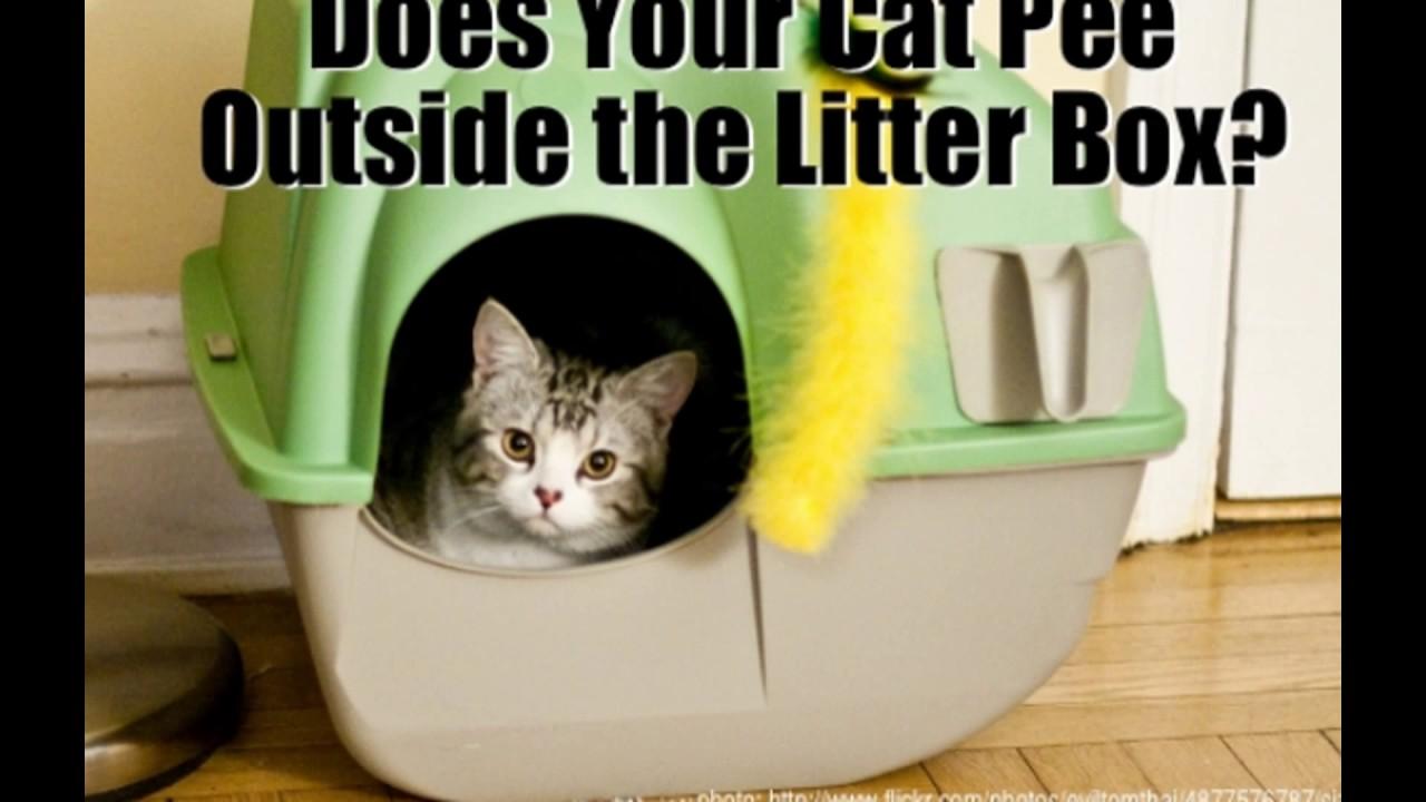 outside littter peeing Cat