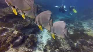 Scuba Diving in Oman, Al Sawadi with Extra Divers during August 2013