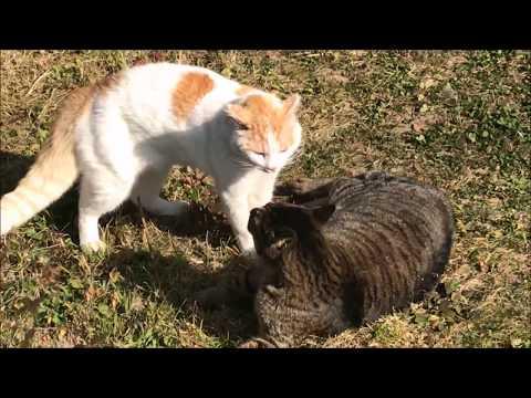 野良猫の本気の喧嘩