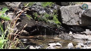 Lory State Park: Well Gulch Nature Trail