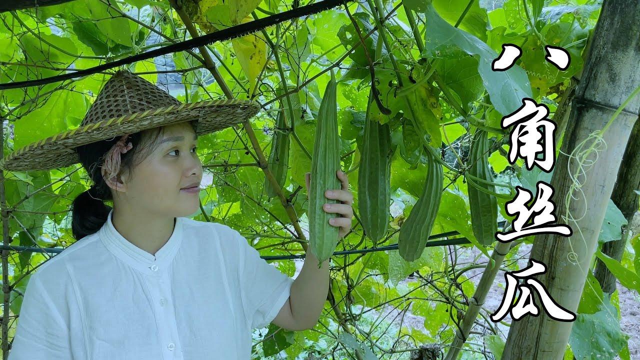 八角丝瓜,最好吃的一种丝瓜,怎么做都好吃