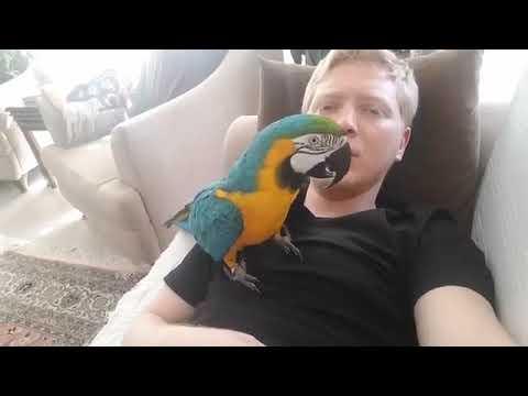 Muhabbet Kuşu Cinsiyeti Nasıl Anlaşılır?