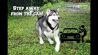 My Dog Reacts To Stranger In Yard Trying To Steal Car!