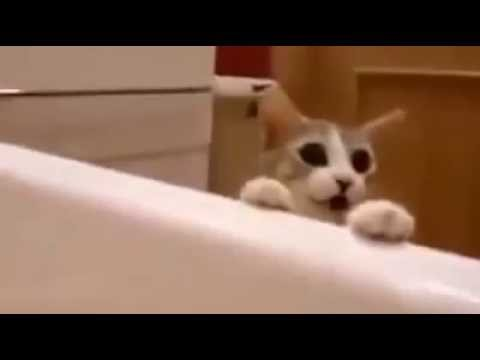 "Cat sees owner ""drowning"" his reaction is unexpected"