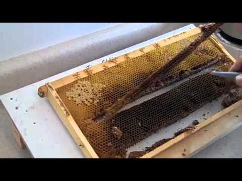 FatBeeMan 1 Minute Tip Very Easy Queen Making