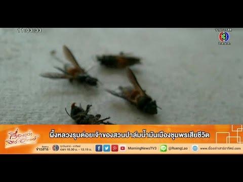 เรื่องเล่าเสาร์-อาทิตย์ ผึ้งหลวงรุมต่อยเจ้าของสวนปาล์มน้ำมันเมืองชุมพรเสียชีวิต  (8พ.ย. 57)