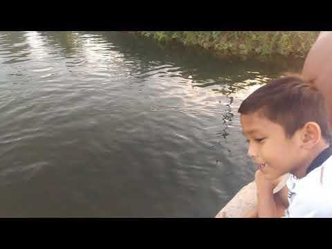 berenang-gratis-di-makroman
