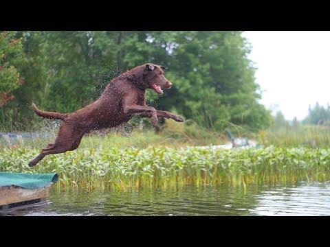 Tucker the Dock Jumping Lab!!! (Panasonic GH5s 120fps Slow Motion AMAZING!)