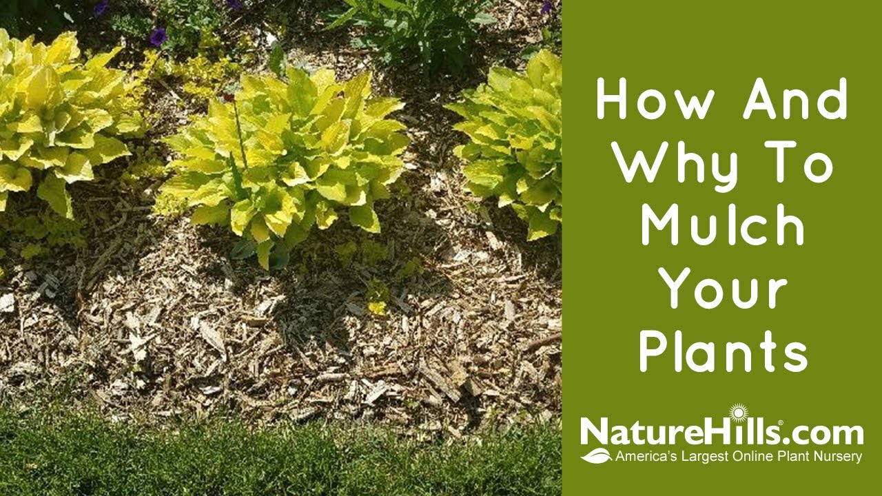How And Why To Mulch Your Plants Naturehills Com Youtube