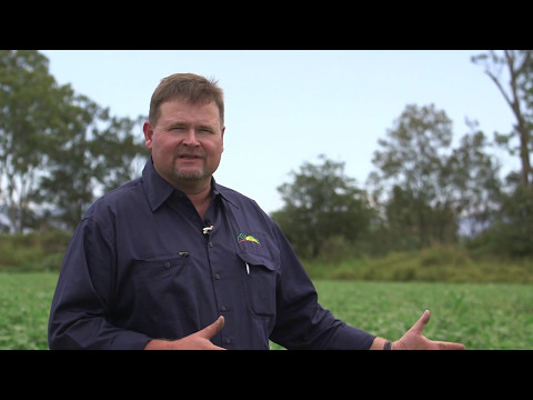 Cover crops in vegetable production: A grower's perspective