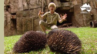 Robert Irwin's Australia Zoo Tour | Irwin Family Adventures