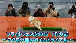 2016年3月6日(日)開催 千葉県野田市関宿城公園 日本最大級の猛禽類イ...