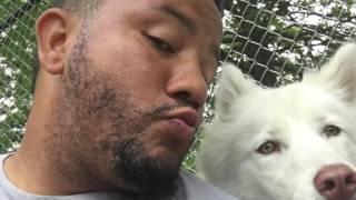 1-Year Old Husky!  Husky Dog Trainers | Off Leash Dog Training For Huskies