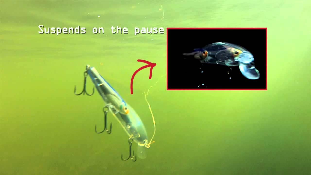 livetarget baitball series- emerald shiner jerkbait - youtube, Fishing Bait