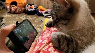 Тайский котик Лукас внимательно смотрит фильм про птичек в лесу! Тайские кошки   это чудо! Funny Cat