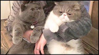 FLUFFY FUNNY Cute  Cat Breeds |#Aww Animals